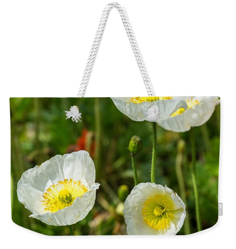 White Iceland Poppy Weekender Tote Bag featuring the photograph White Iceland Poppy - Beautiful Spring Poppy Flowers In Bloom. by Jamie Pham