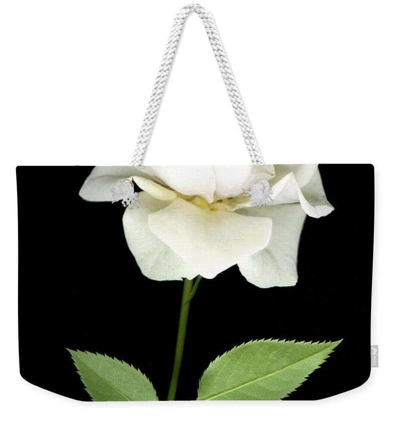 Roses Weekender Tote Bag featuring the photograph White Rose by Jim Smith