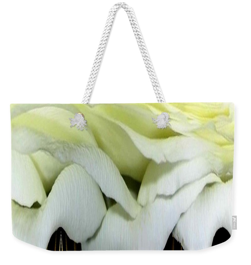 Roses Weekender Tote Bag featuring the photograph White Rose Polar Coordinates by Rose Santuci-Sofranko