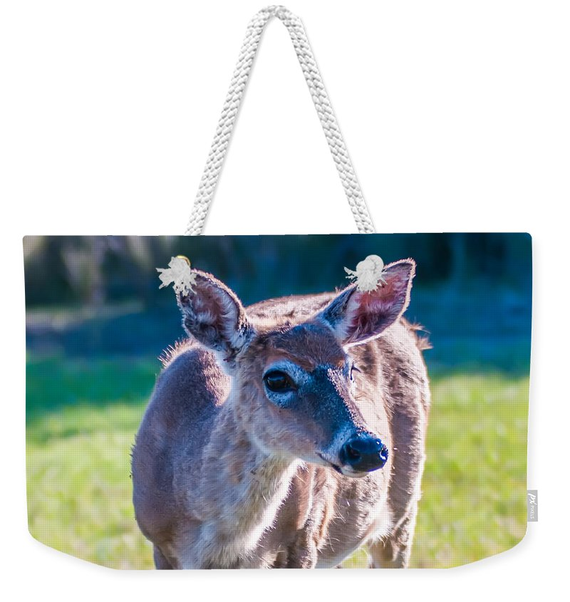 White Weekender Tote Bag featuring the photograph White Tail Deer Bambi In The Wild by Alex Grichenko