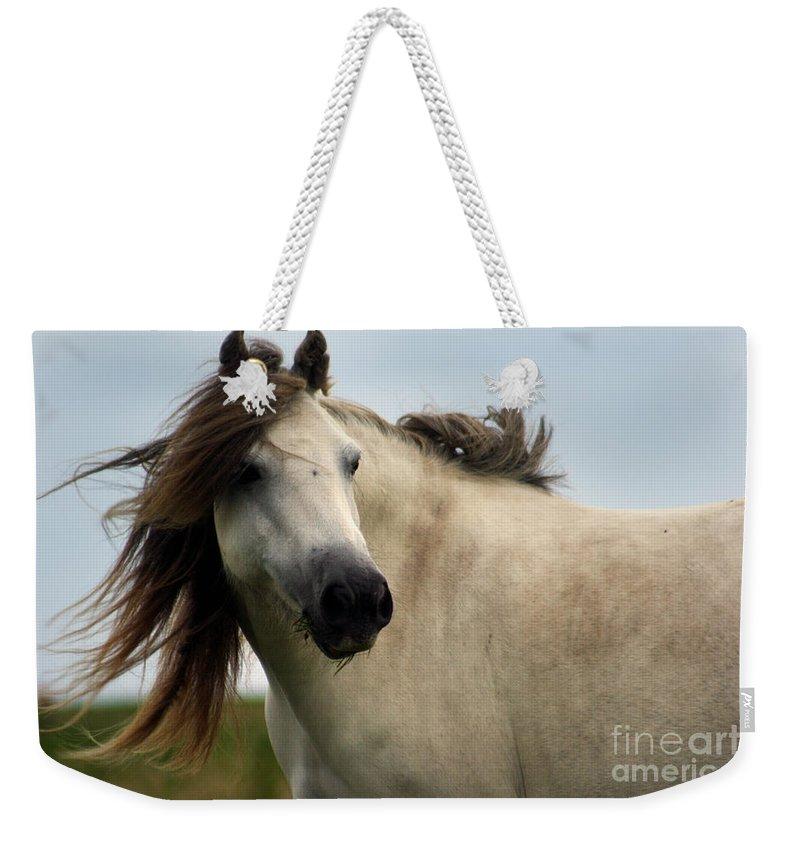 Horse Weekender Tote Bag featuring the photograph Wind In The Mane by Angel Ciesniarska