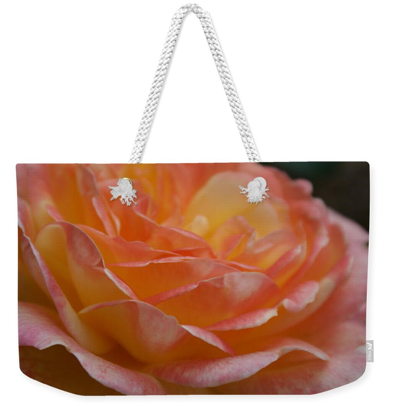 Yellow And Hot Pink Rose Weekender Tote Bag featuring the photograph Yellow And Hot Pink Rose I by Jacqueline Russell