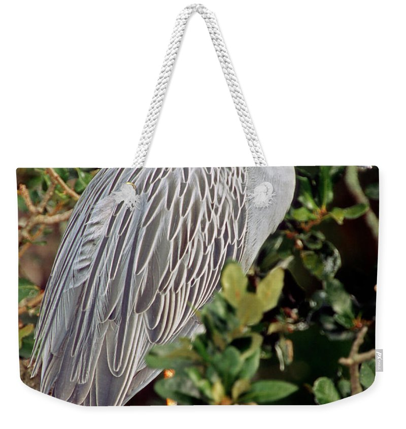 Nature Weekender Tote Bag featuring the photograph Yellow Crowned Night Heron by Millard H. Sharp