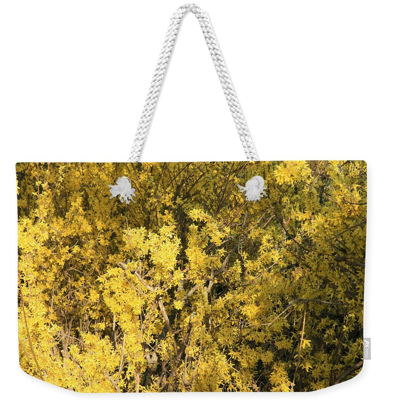 Spring Weekender Tote Bag featuring the photograph Yellow Spring by Cora Wandel