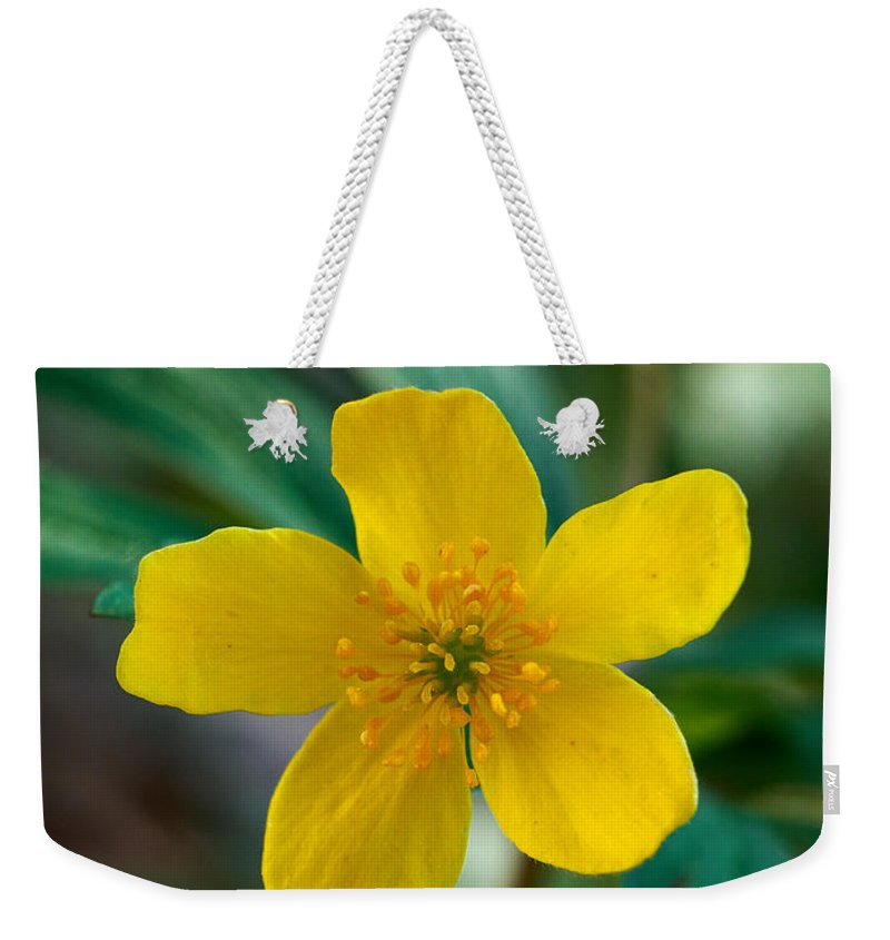 Lehto Weekender Tote Bag featuring the photograph Yellow Wood Anemone by Jouko Lehto