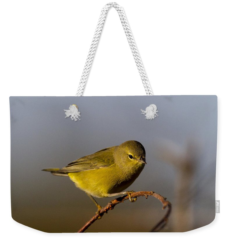 Doug Lloyd Weekender Tote Bag featuring the photograph Orangecrowned Warbler by Doug Lloyd