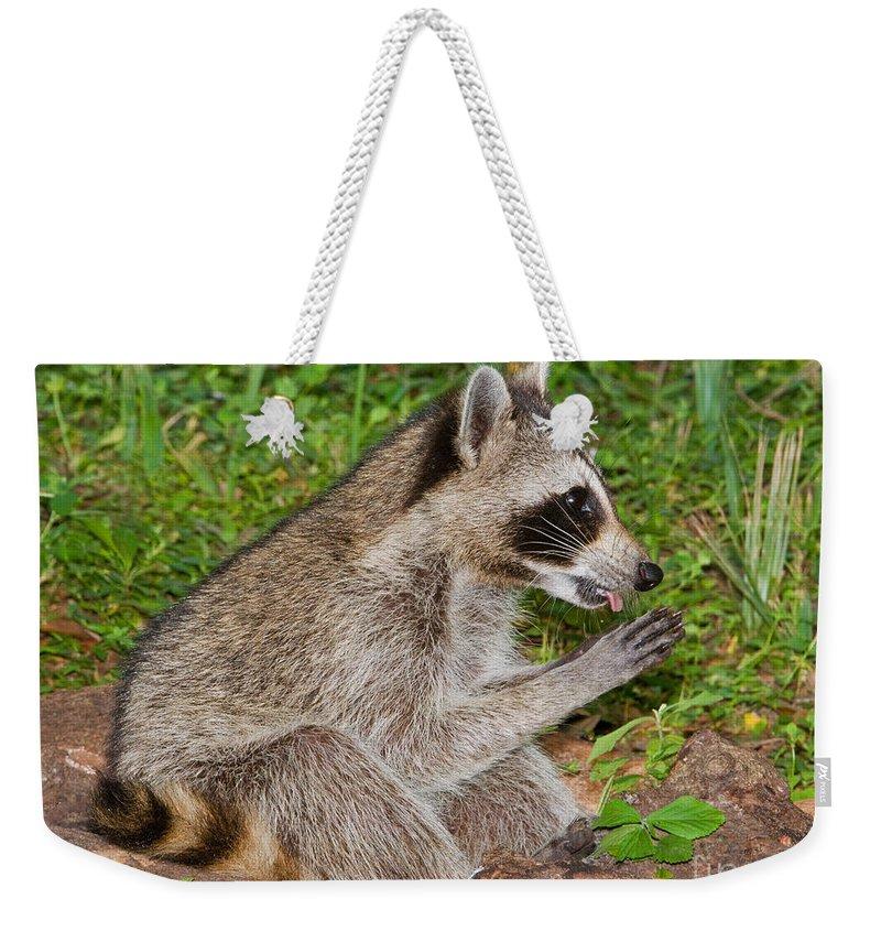 Fauna Weekender Tote Bag featuring the photograph Raccoon by Millard H. Sharp