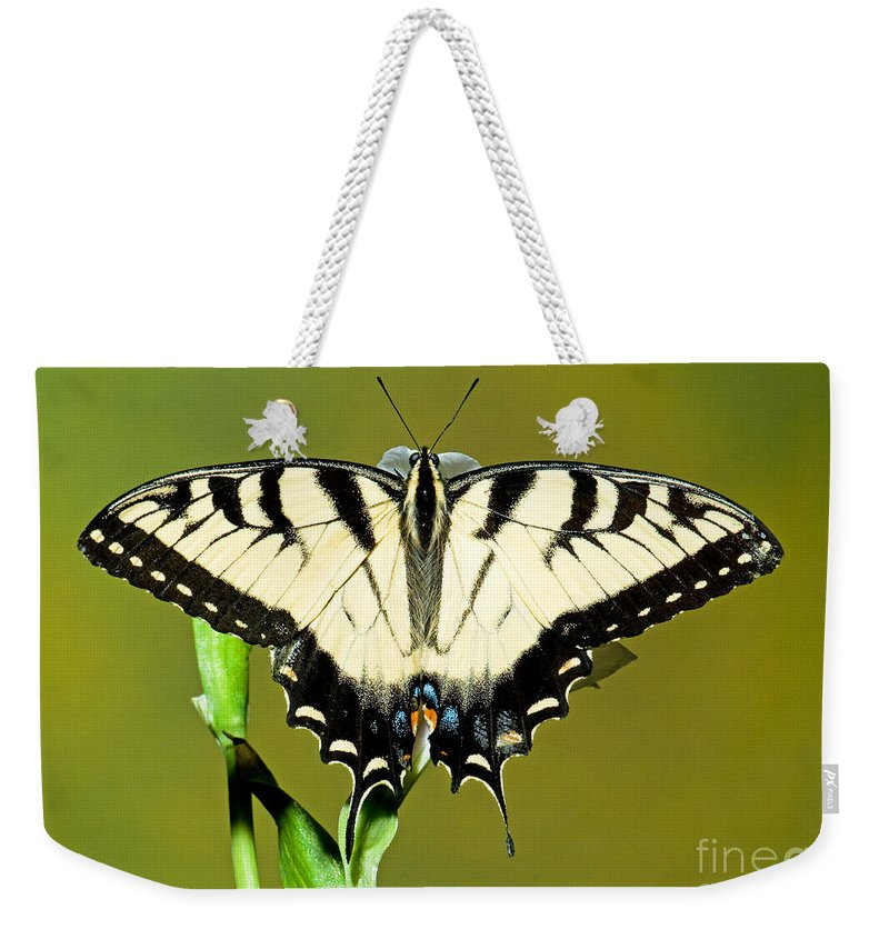 Eastern Tiger Swallowtail Butterfly Weekender Tote Bag featuring the photograph Eastern Tiger Swallowtail Butterfly by Millard H. Sharp