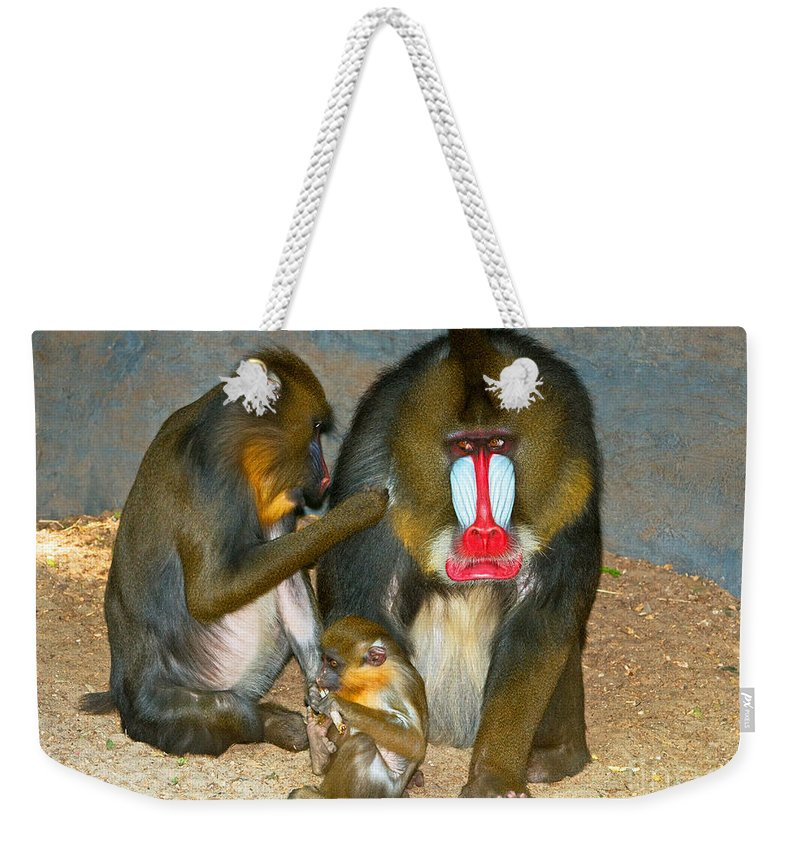 Animal Weekender Tote Bag featuring the photograph Mandrill by Millard H. Sharp