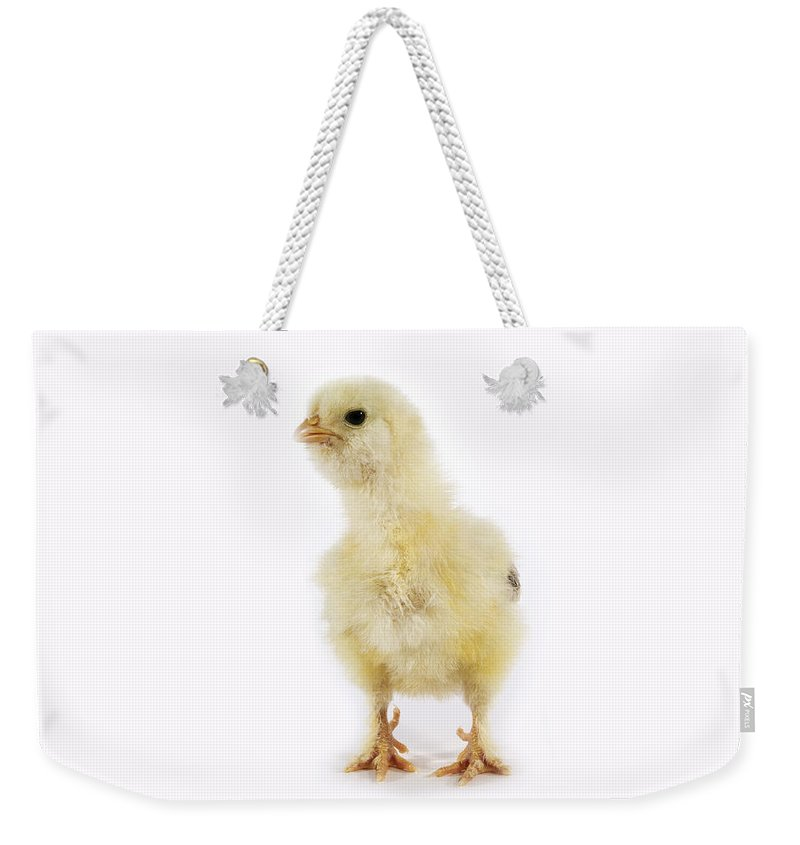 Agriculture Weekender Tote Bag featuring the photograph Poussin by Gerard Lacz