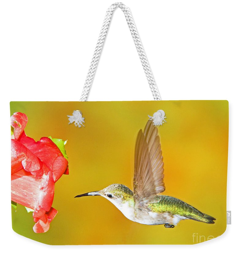 Nature Weekender Tote Bag featuring the photograph Ruby Throated Hummingbird by Millard H. Sharp