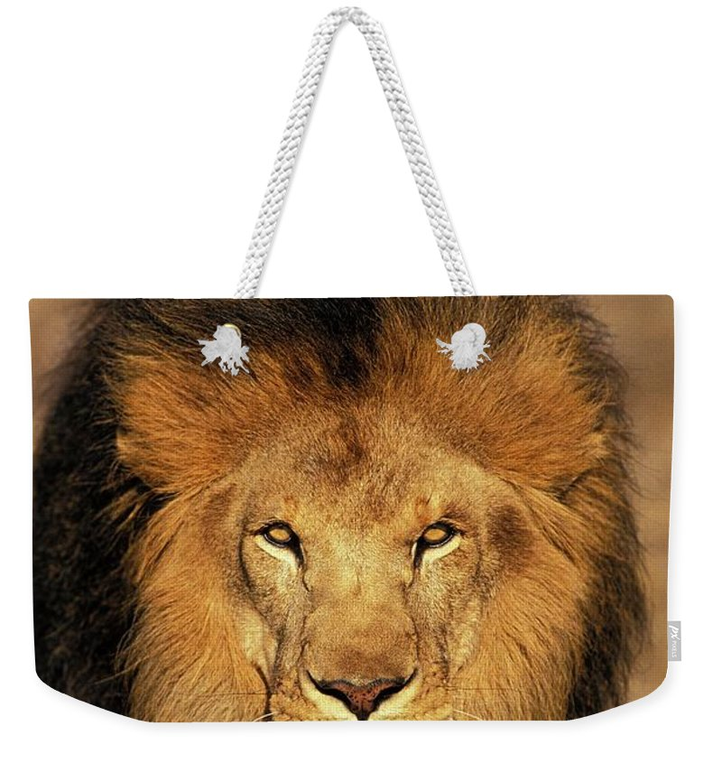 Adult Weekender Tote Bag featuring the photograph Lion Dafrique Panthera Leo by Gerard Lacz