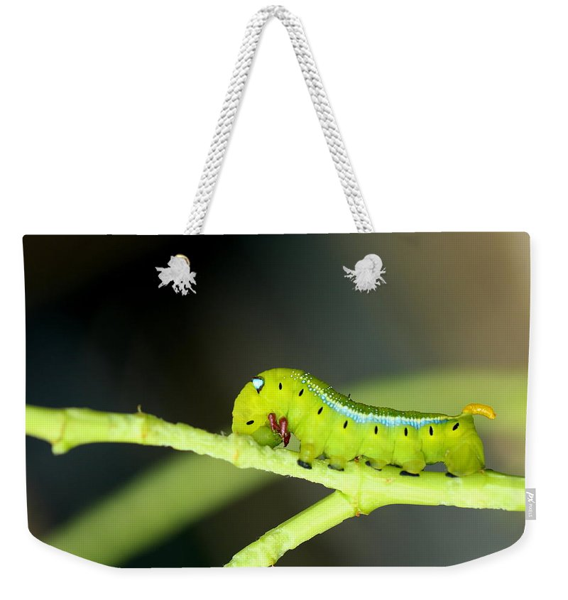 Butterfly Weekender Tote Bag featuring the photograph Butterfly by Heike Hultsch