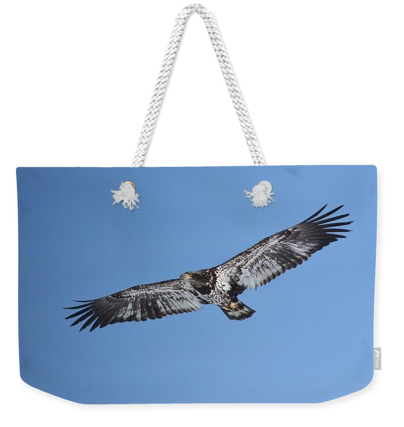 Bald Eagle Weekender Tote Bag featuring the photograph 2nd Year Flight In The Sun by Teresa McGill