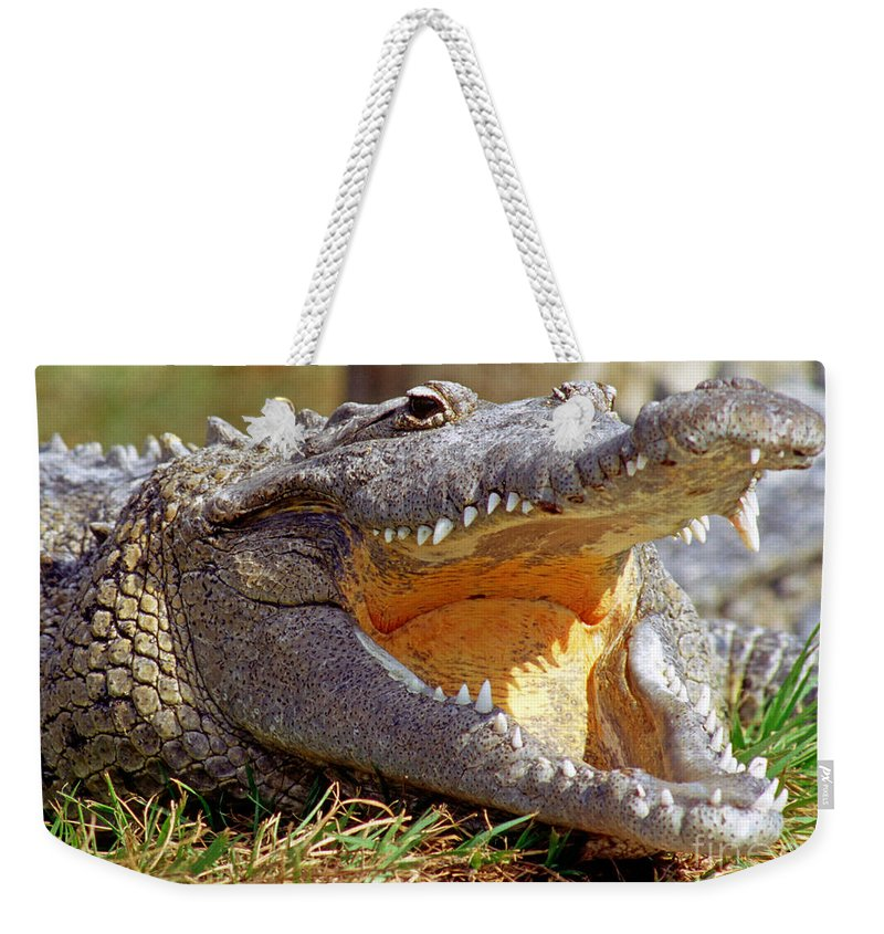 Nature Weekender Tote Bag featuring the photograph American Crocodile by Millard H. Sharp