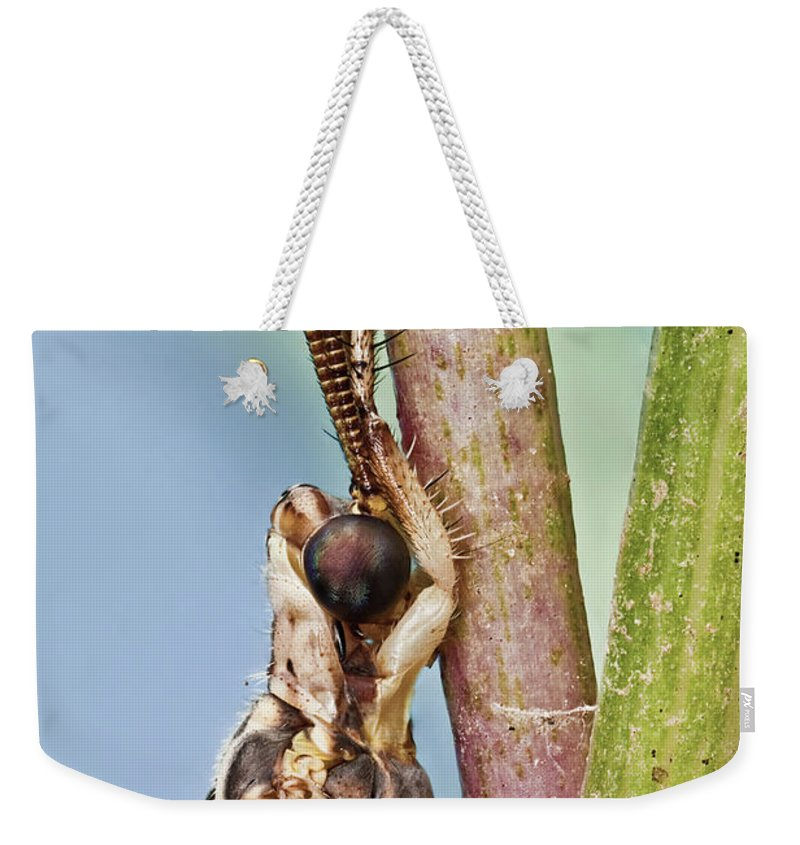 Image Digitally Manipullated Weekender Tote Bag featuring the photograph Antlion 31 by Javier Torrent - Vwpics