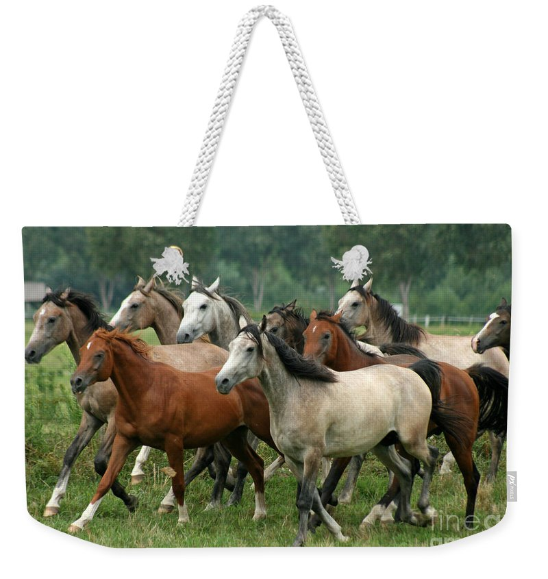 Horse Weekender Tote Bag featuring the photograph Arabian Horses by Angel Ciesniarska