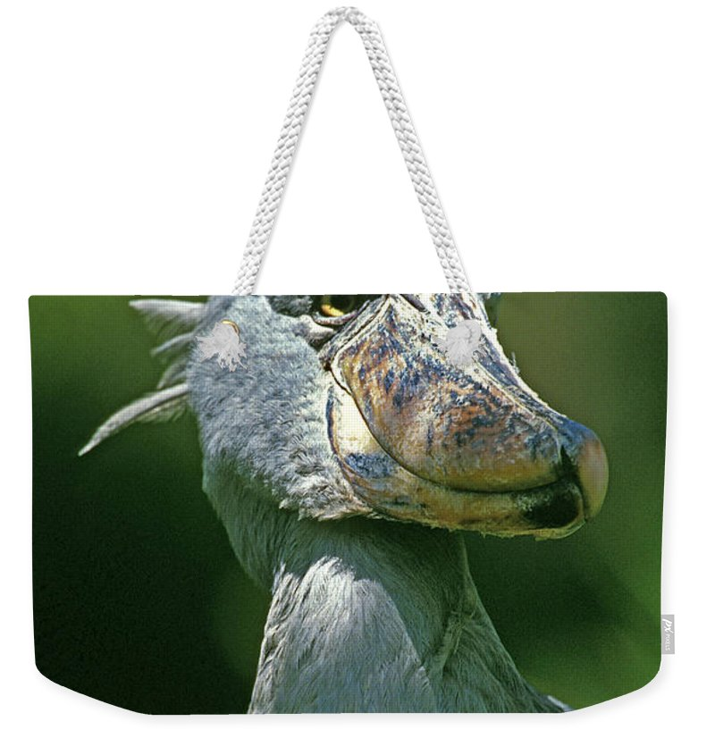 Adult Weekender Tote Bag featuring the photograph Bec En Sabot Du Nil Balaeniceps Rex by Gerard Lacz