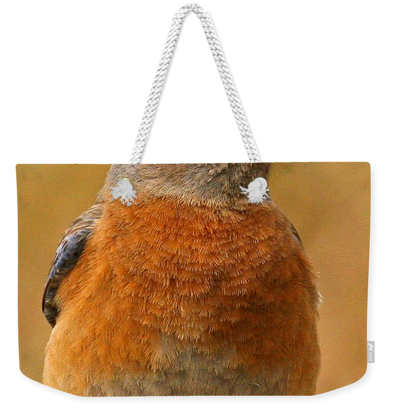 Animals Weekender Tote Bag featuring the photograph Bluebird by Jean Noren