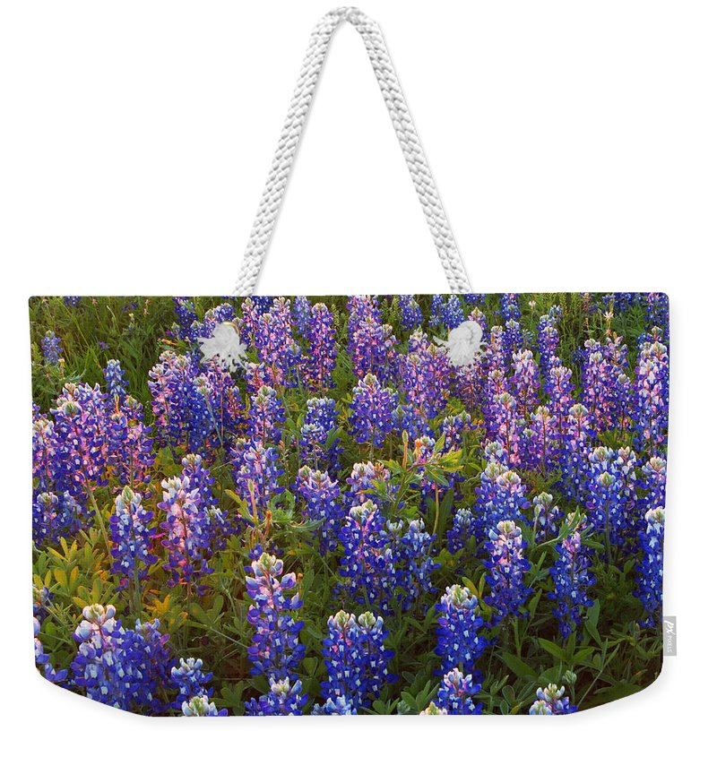 Texas Weekender Tote Bag featuring the photograph Bluebonnets At Sunset by Susan Rovira
