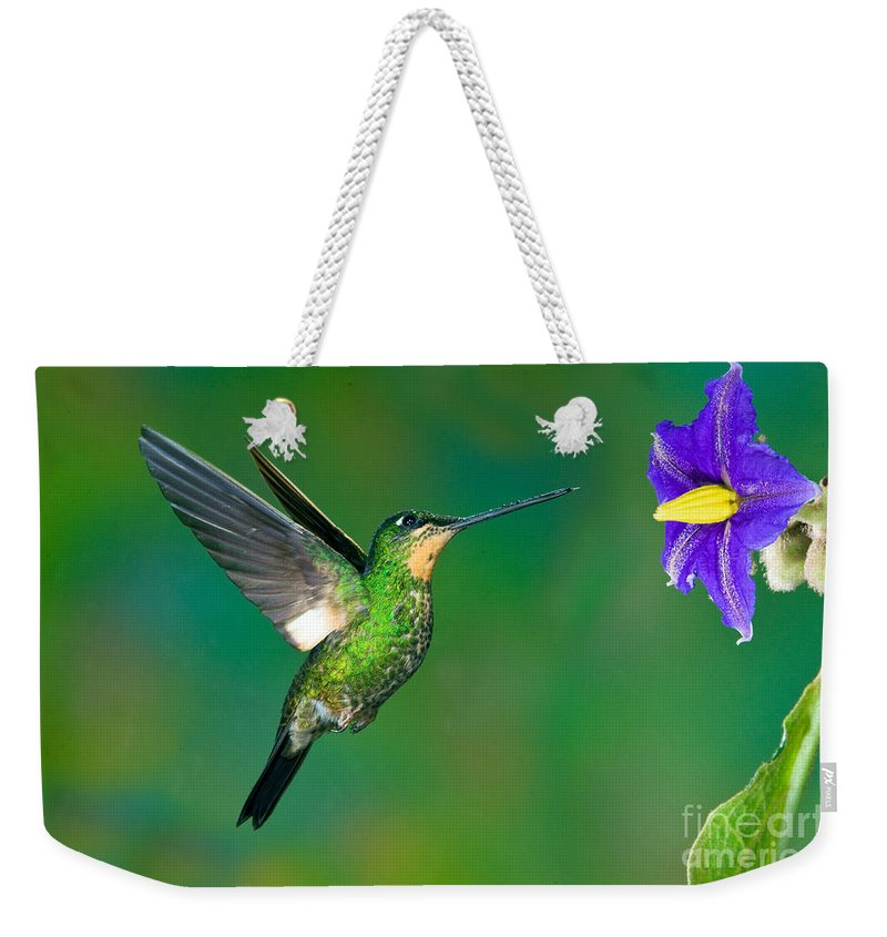Animal Weekender Tote Bag featuring the photograph Buff-winged Starfrontlet by Anthony Mercieca