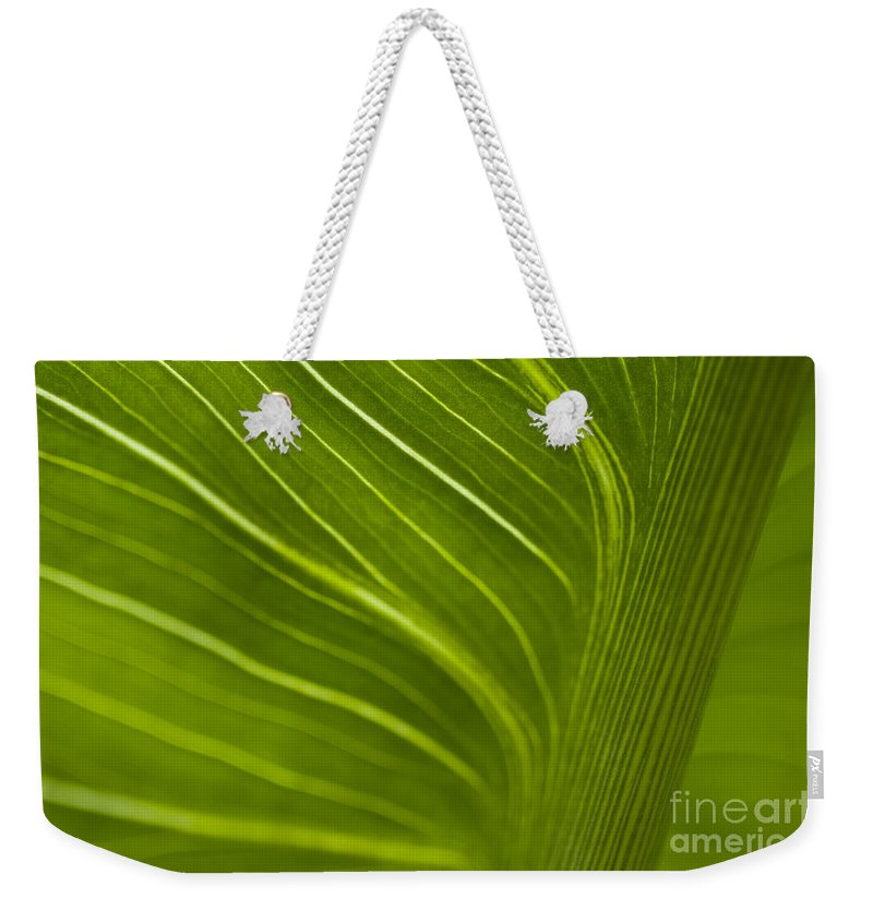 Beauty Weekender Tote Bag featuring the photograph Calla Lily Stem Close Up by Jim Corwin