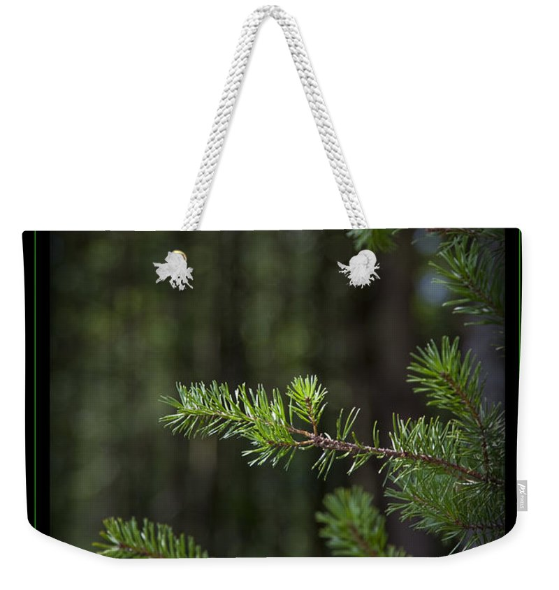 Forest Weekender Tote Bag featuring the photograph Can't See The Forest by John Stephens