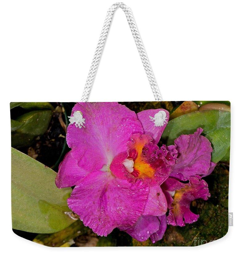 Flower Weekender Tote Bag featuring the photograph Cattleya by Millard H. Sharp