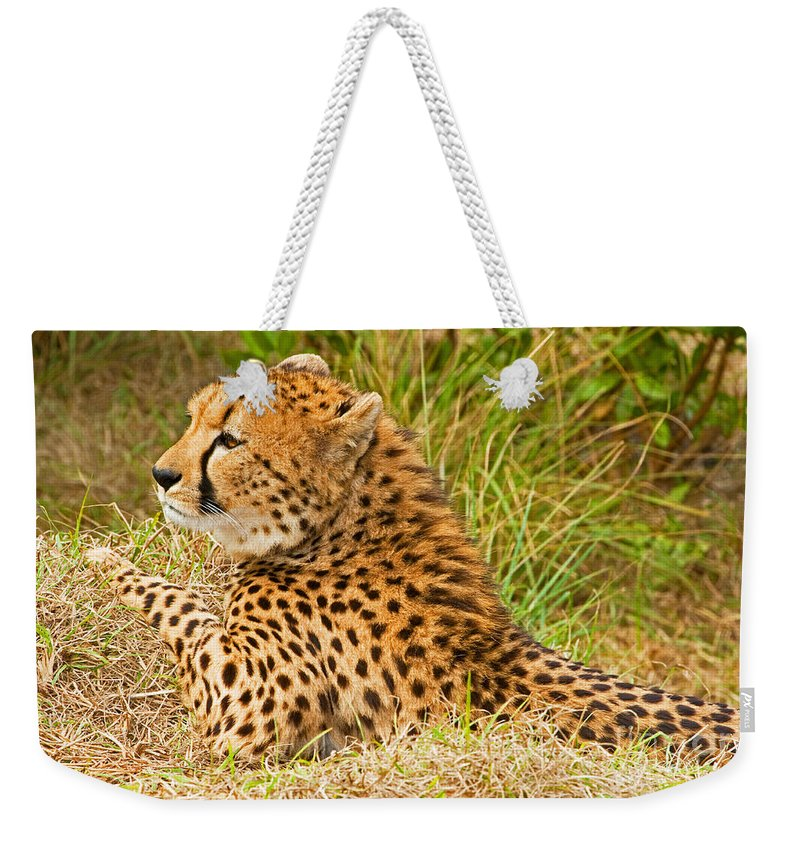 Nature Weekender Tote Bag featuring the photograph Cheetah by Millard H. Sharp