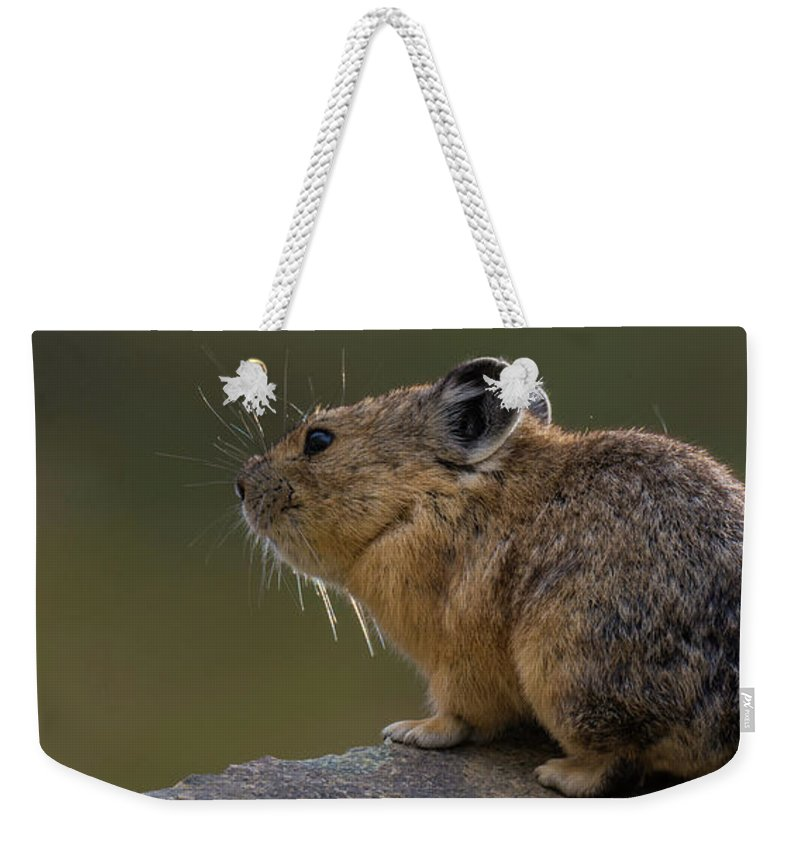 Photography Weekender Tote Bag featuring the photograph Close-up Of Pika Ochotona Princeps by Panoramic Images