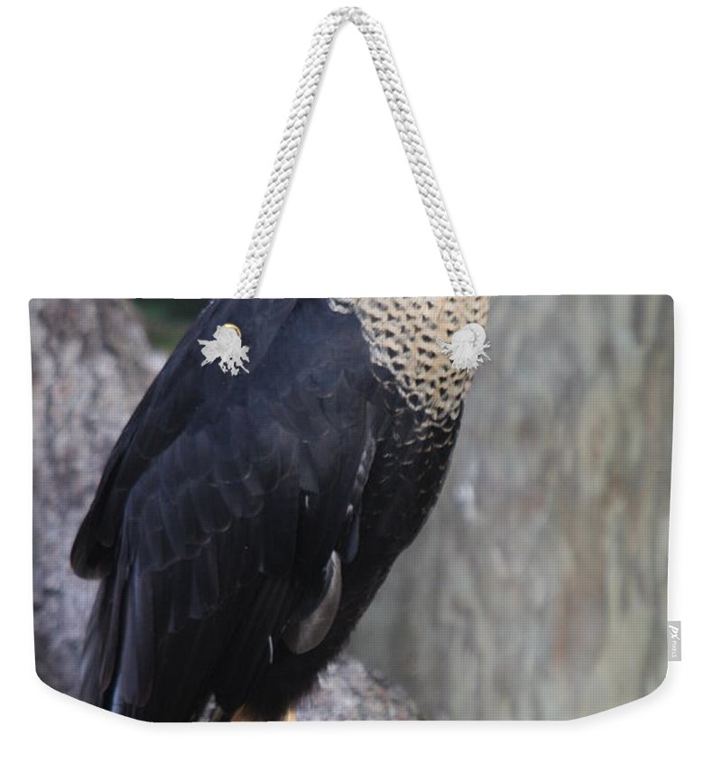 Crested Carara Weekender Tote Bag featuring the photograph Crested Carara by Christiane Schulze Art And Photography