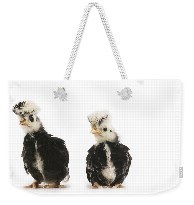Agriculture Weekender Tote Bag featuring the photograph Faverolle by Gerard Lacz