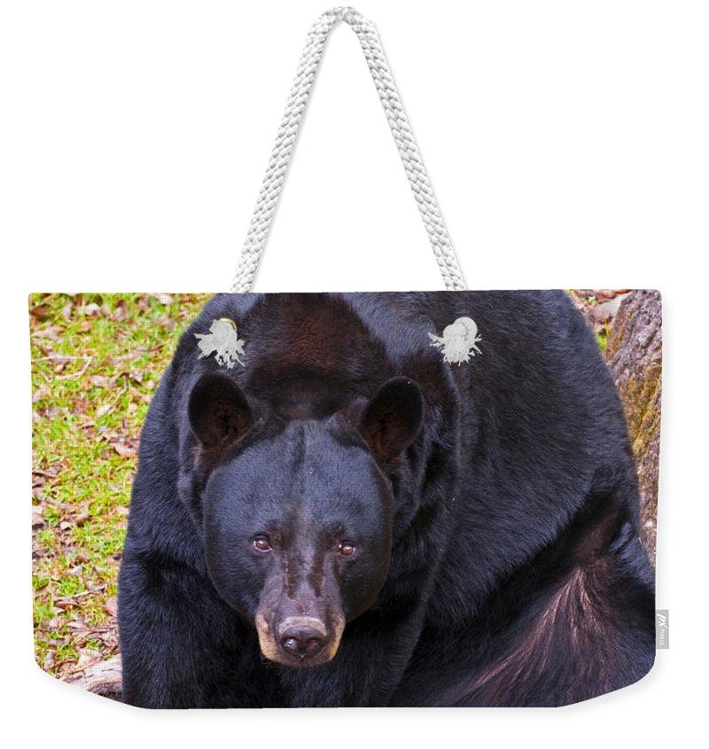 Animal Weekender Tote Bag featuring the photograph Florida Black Bear by Millard H. Sharp