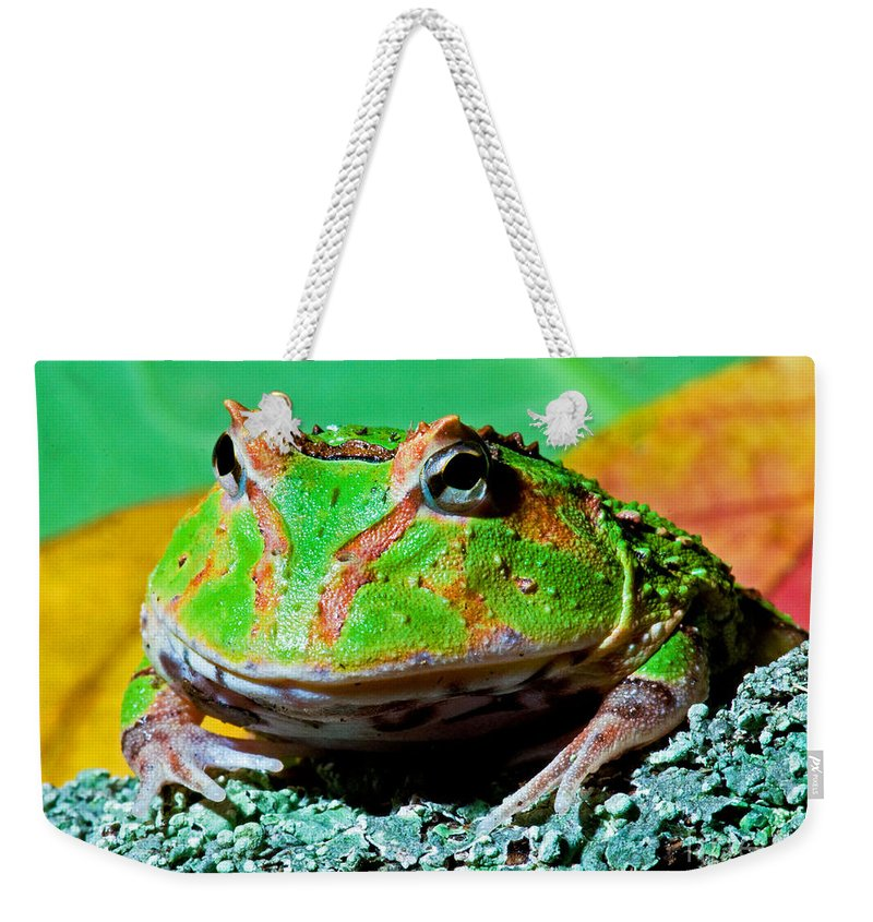 Wildlife Weekender Tote Bag featuring the photograph Green Fantasy Frogpacman Frog by Millard H. Sharp