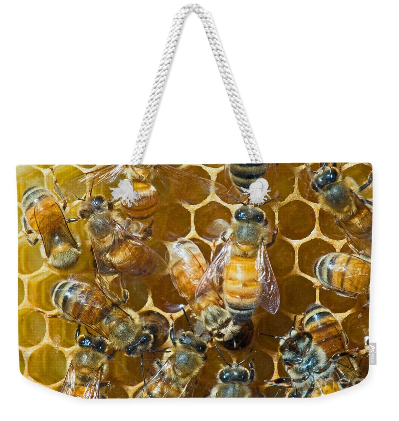 Insect Weekender Tote Bag featuring the photograph Honey Bees In Hive by Millard H. Sharp