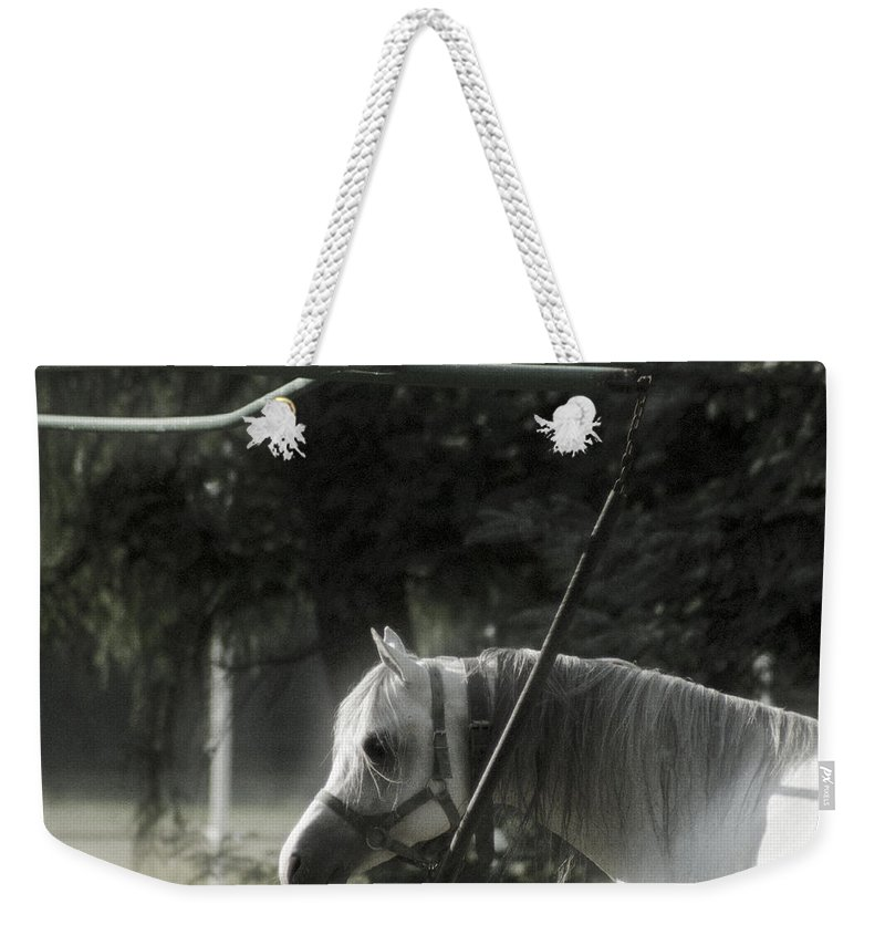 Horse Weekender Tote Bag featuring the photograph In The Captivity by Angel Ciesniarska