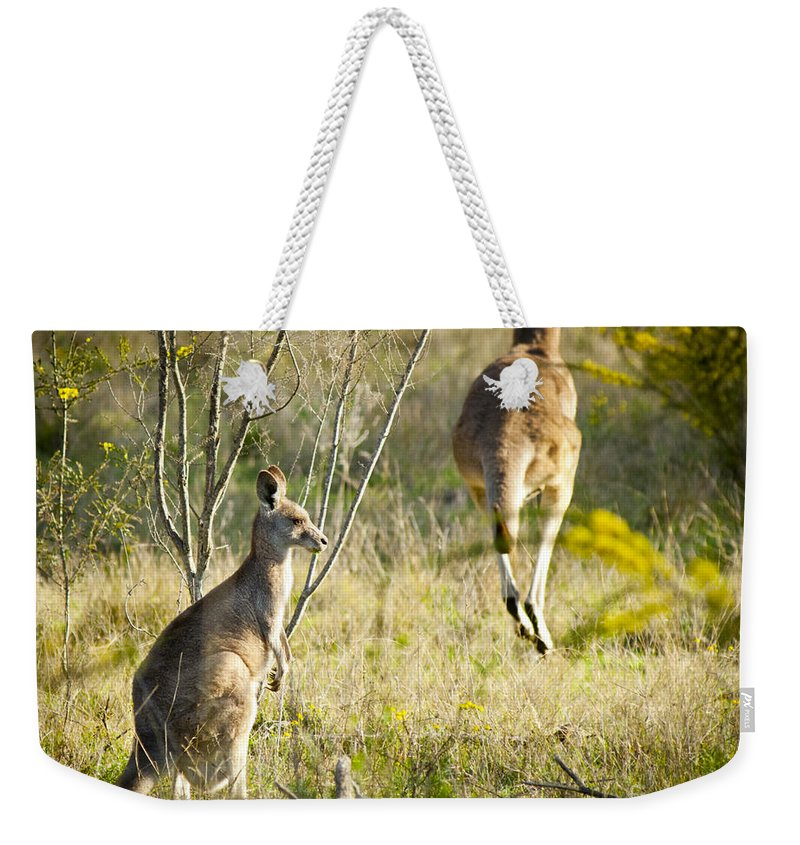Animal Weekender Tote Bag featuring the photograph Kangaroo by Tim Hester