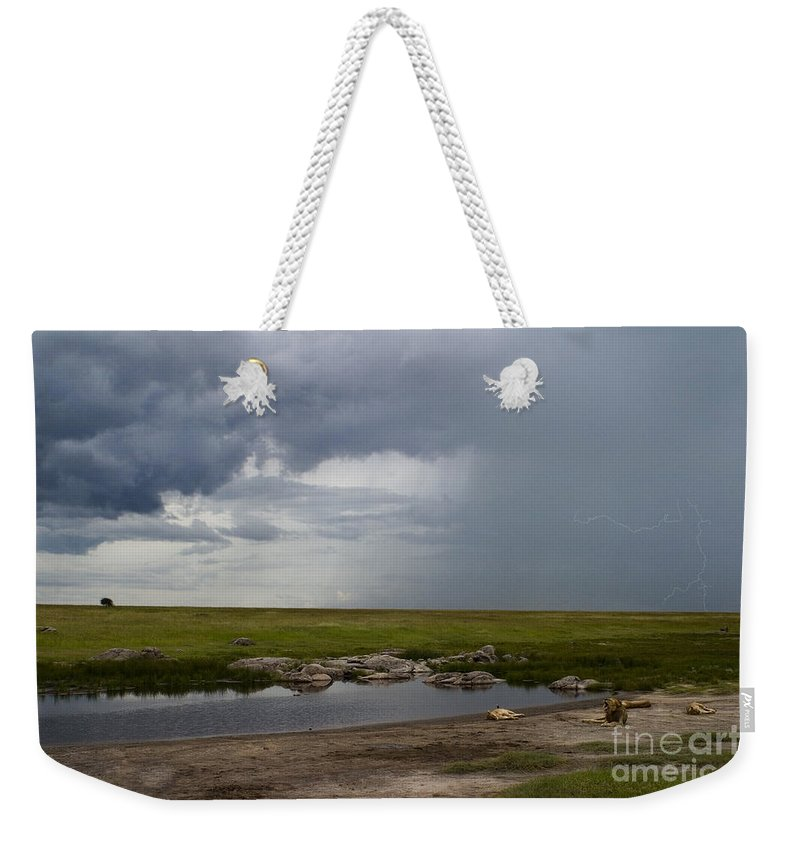 Panthera Leo Weekender Tote Bag featuring the photograph Lions In The Serengeti by J L Woody Wooden