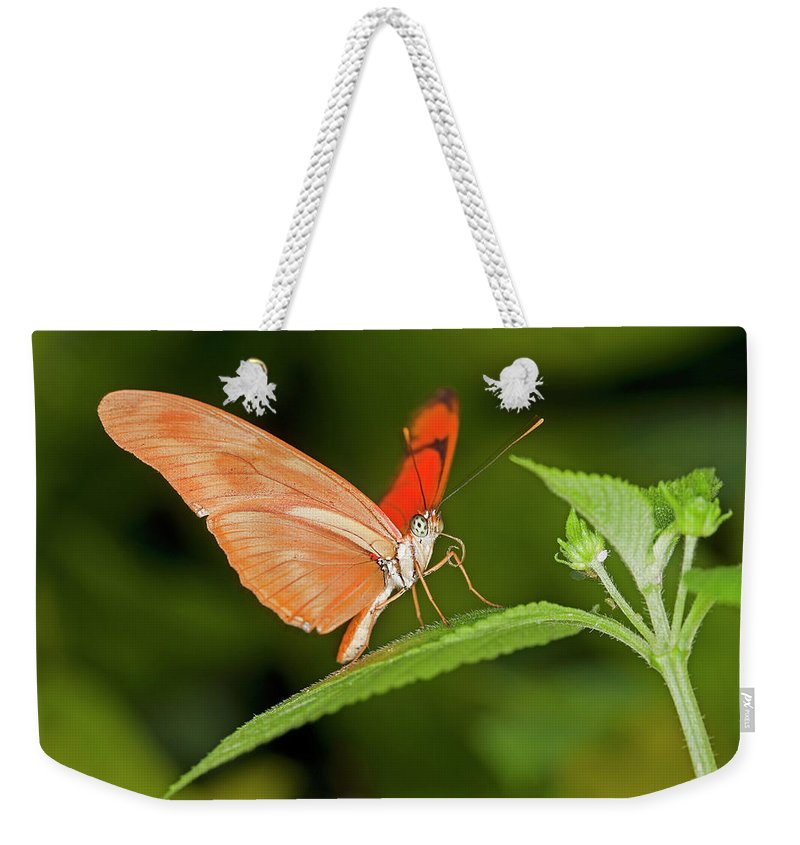 Adult Weekender Tote Bag featuring the photograph Papillon by Gerard Lacz