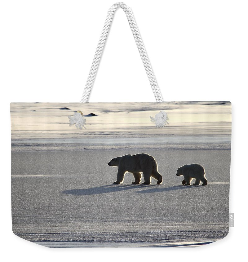 Polar Bears Weekender Tote Bag featuring the photograph Polar Bear Mother And Cub by Carole-Anne Fooks