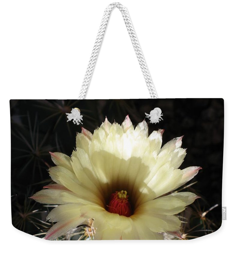 Cactus Weekender Tote Bag featuring the photograph Pure Beauty by Christiane Schulze Art And Photography