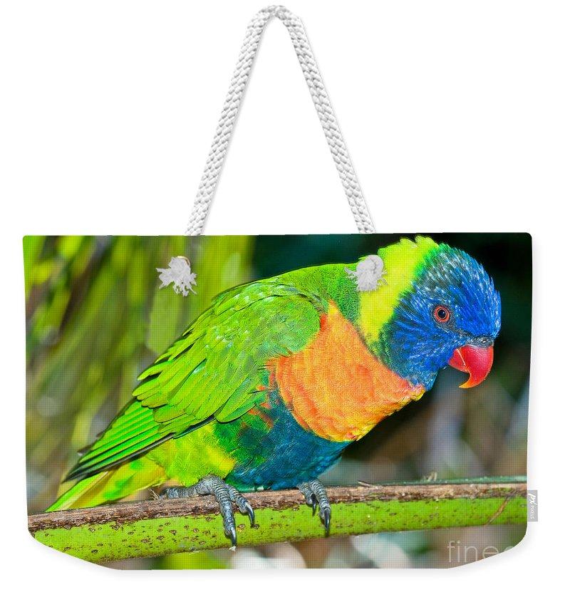 Nature Weekender Tote Bag featuring the photograph Rainbow Lorikeet by Millard H. Sharp