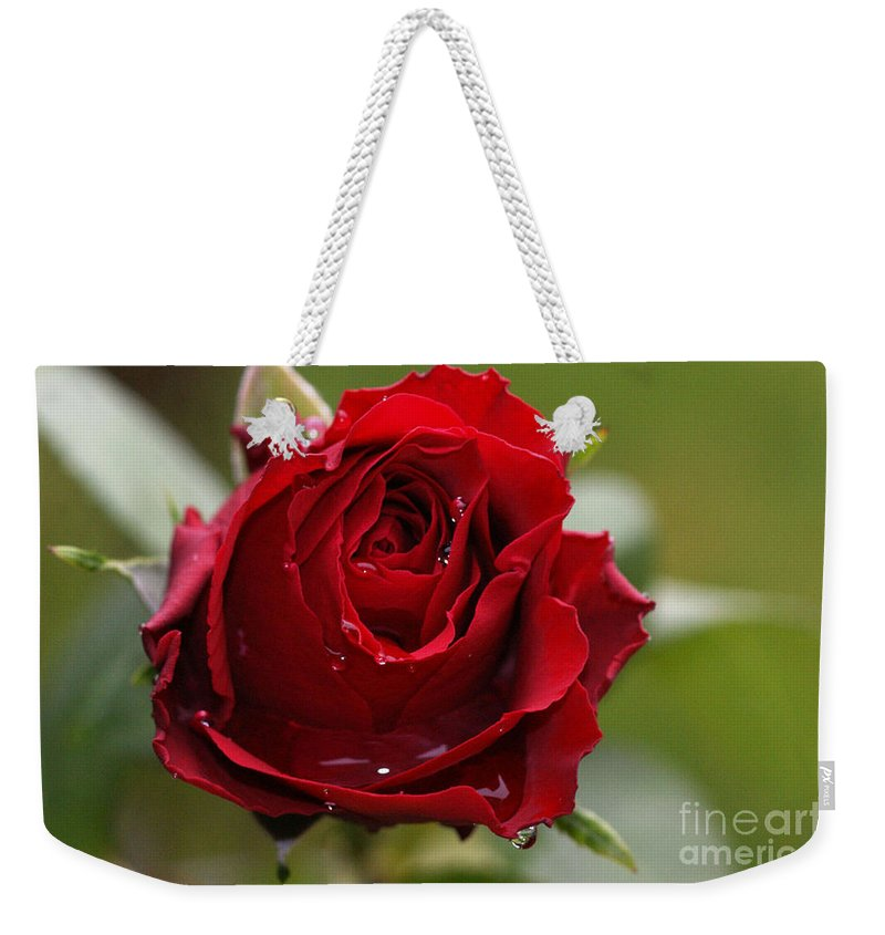 Red Weekender Tote Bag featuring the photograph Red Rose by Carol Lynch