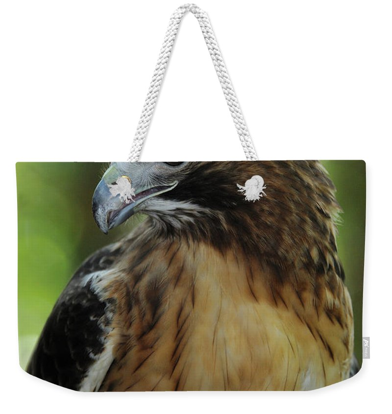 Bird Weekender Tote Bag featuring the photograph Red-tailed Hawk by Mark Conlin