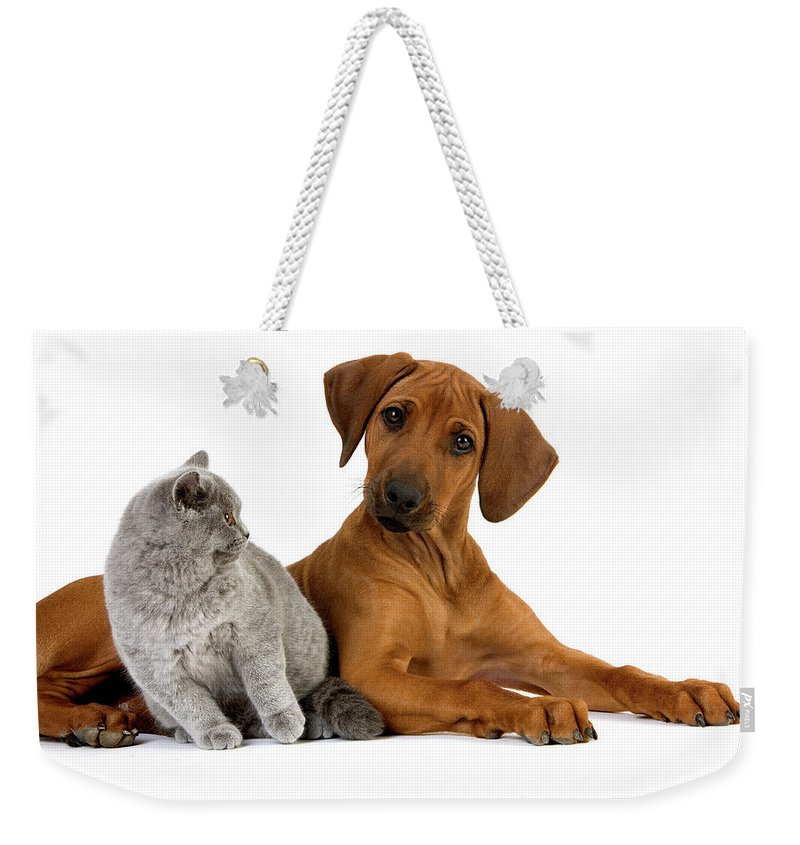 Adult Weekender Tote Bag featuring the photograph Rhodesian Ridgeback by Gerard Lacz
