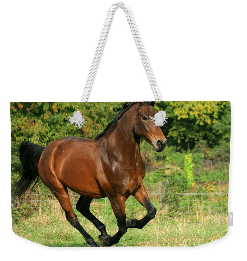 Horse Weekender Tote Bag featuring the photograph Running Free by Angel Ciesniarska