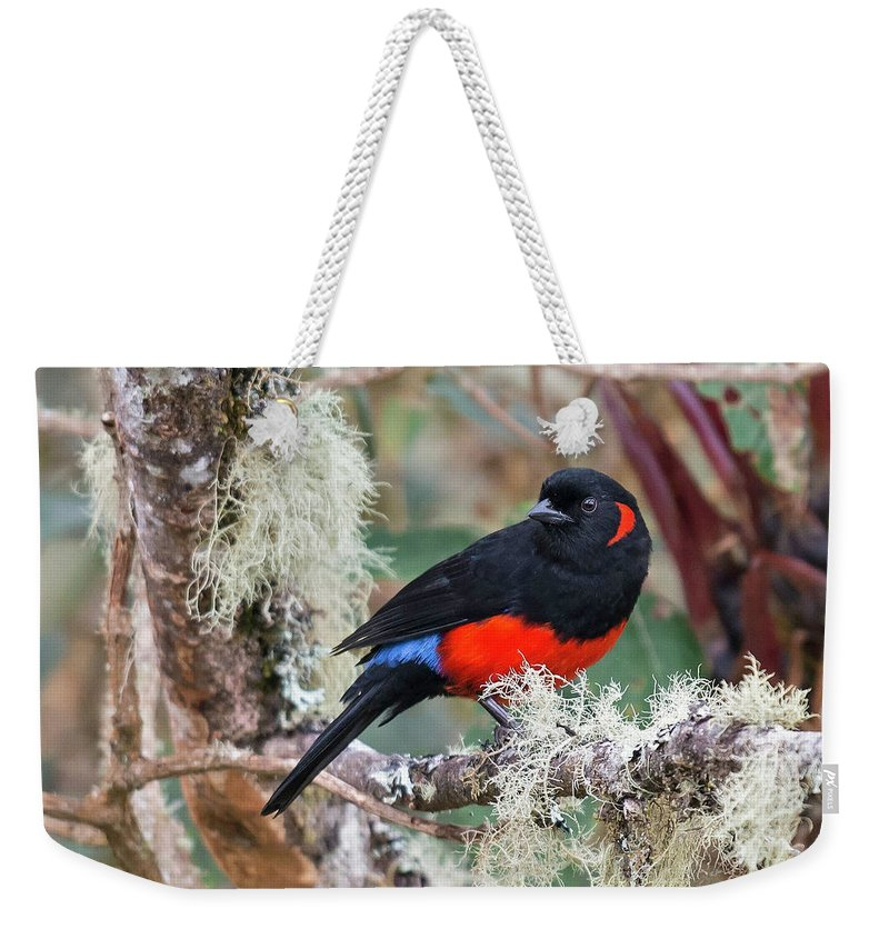 Birds Weekender Tote Bag featuring the photograph Scarlet-bellied Mountain-tanager by Juan Jose Arango