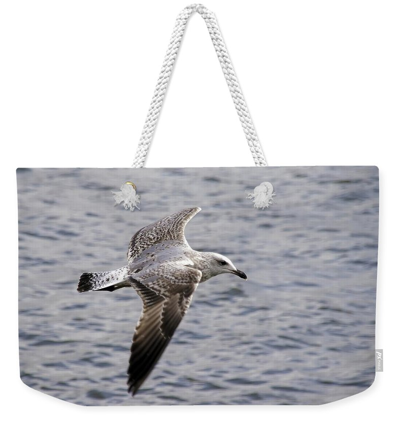 Flight Weekender Tote Bag featuring the photograph Seagull by Paulo Goncalves
