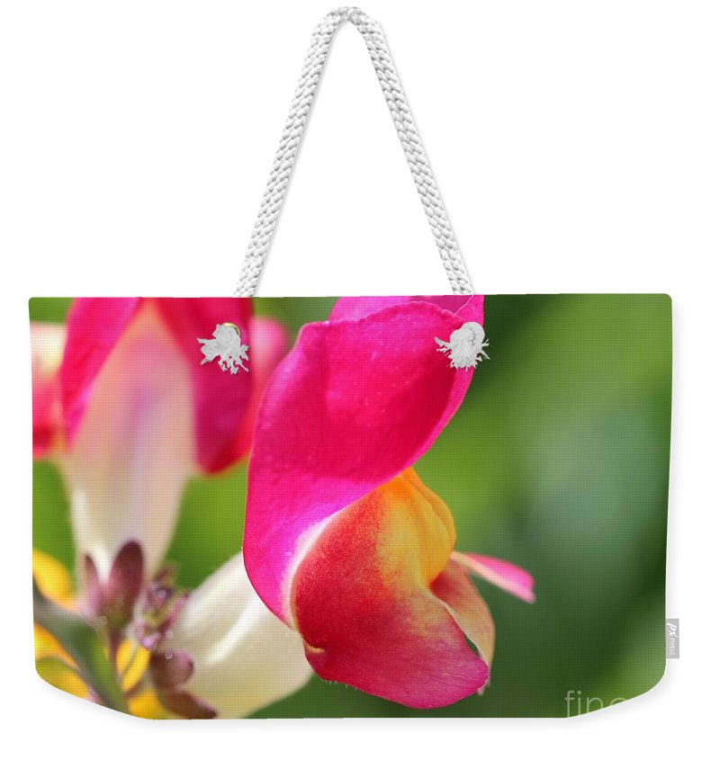 Mccombie Weekender Tote Bag featuring the photograph Snapdragon Named Floral Showers Red And Yellow Bicolour by J McCombie
