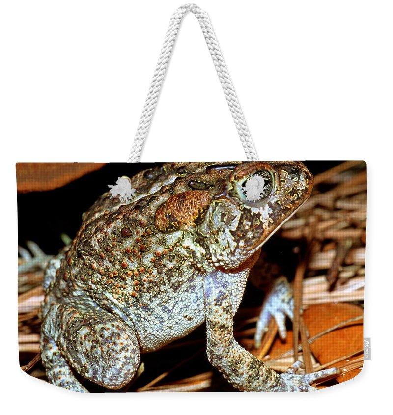Animal Weekender Tote Bag featuring the photograph Southern Toad Bufo Terrestris by Millard H. Sharp
